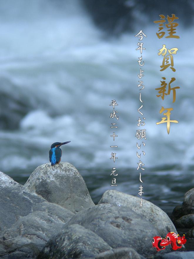 090101_kawasemi1.jpg