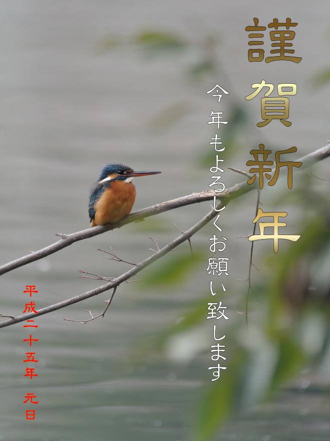 121231_kawasemi1.jpg